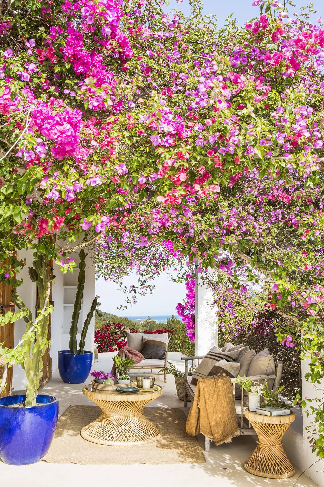El Mueble Salines Ibiza 731. Un porche rodeado por una frondosa buganvilla