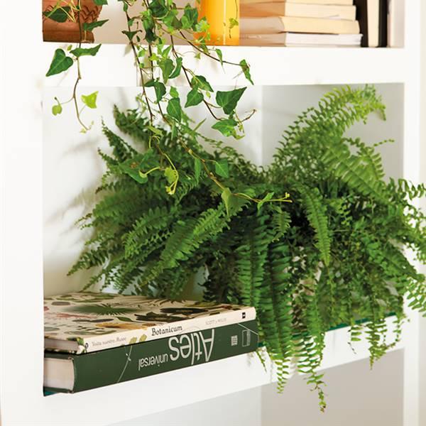 Plantas ideales para pisos pequeños