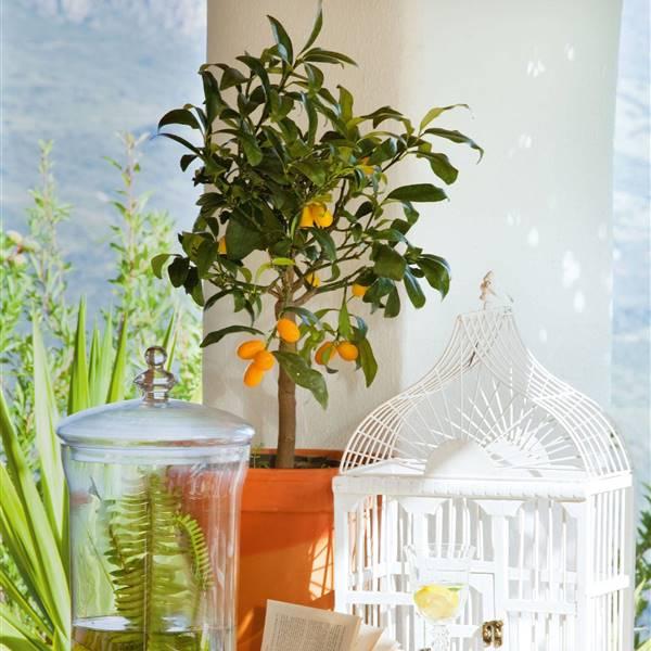 Árboles frutales pequeños que puedes cultivar en maceta
