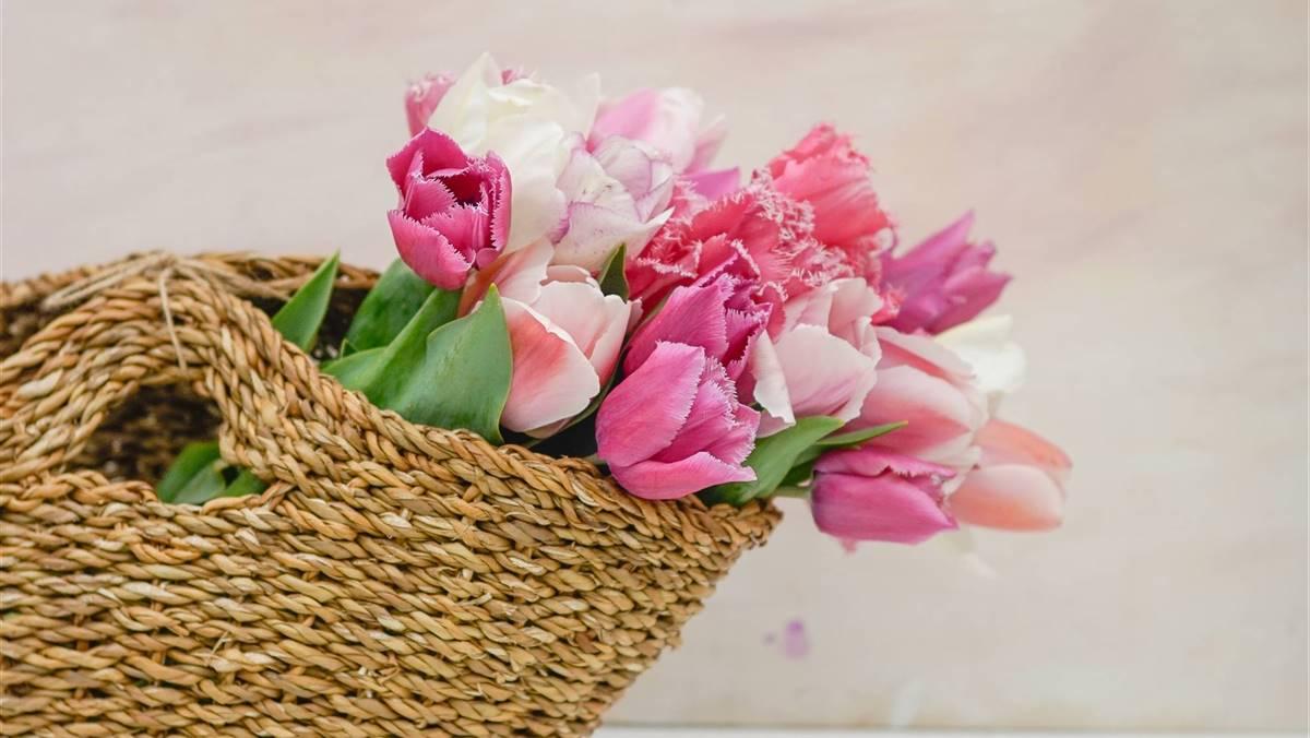 Cual Es El Significado Del Color De Los Tulipanes Information and translations of tulipanes in the most comprehensive dictionary definitions resource on the web. significado del color de los tulipanes