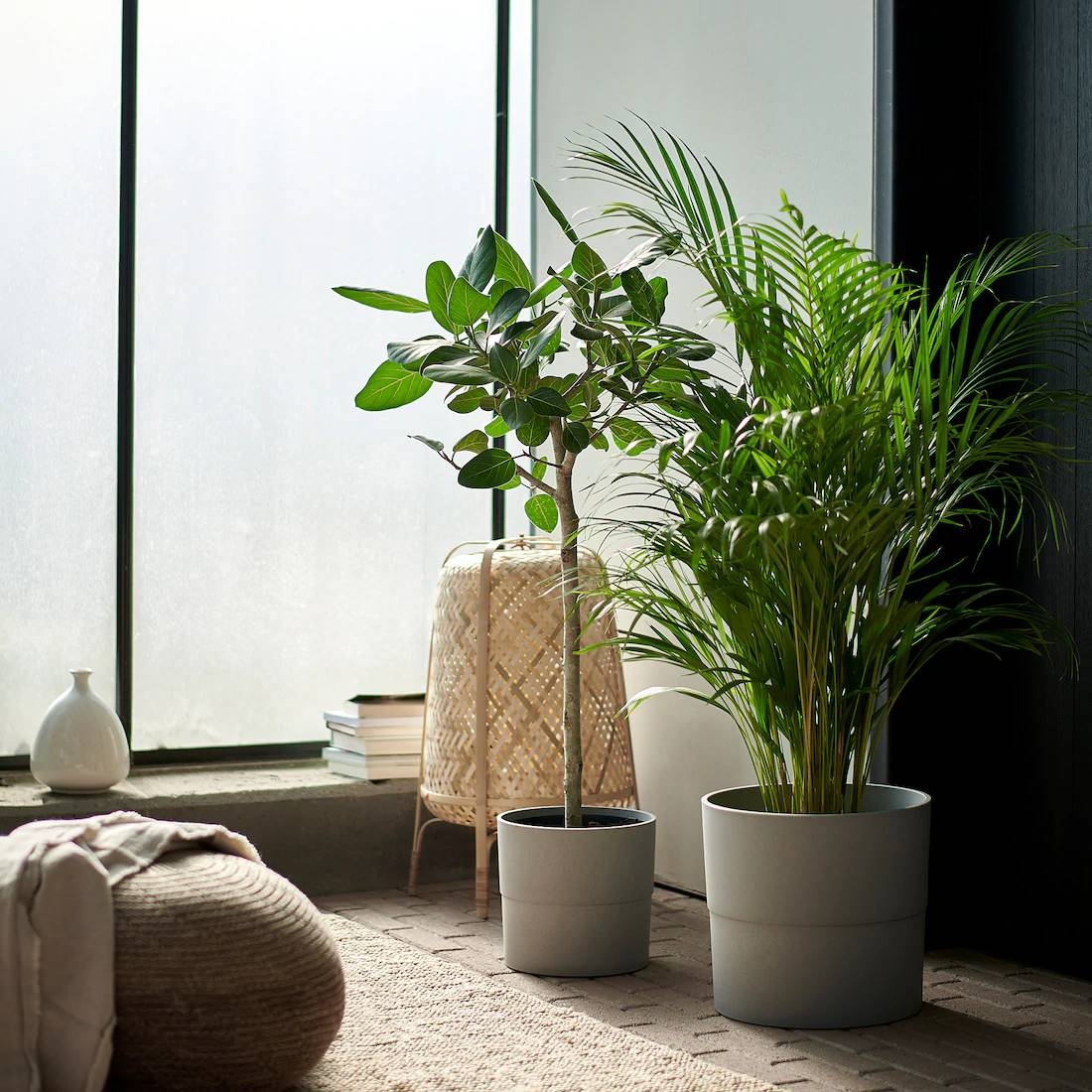 dypsis-lutescens-ikea