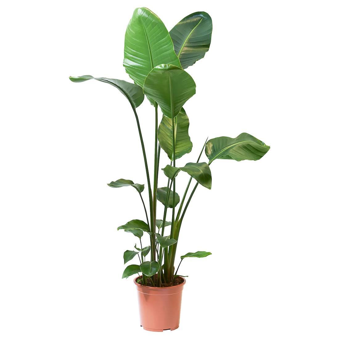 plantas naturales de interior ikea
