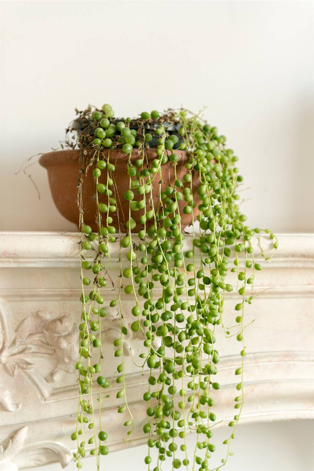 String of pearls manomano