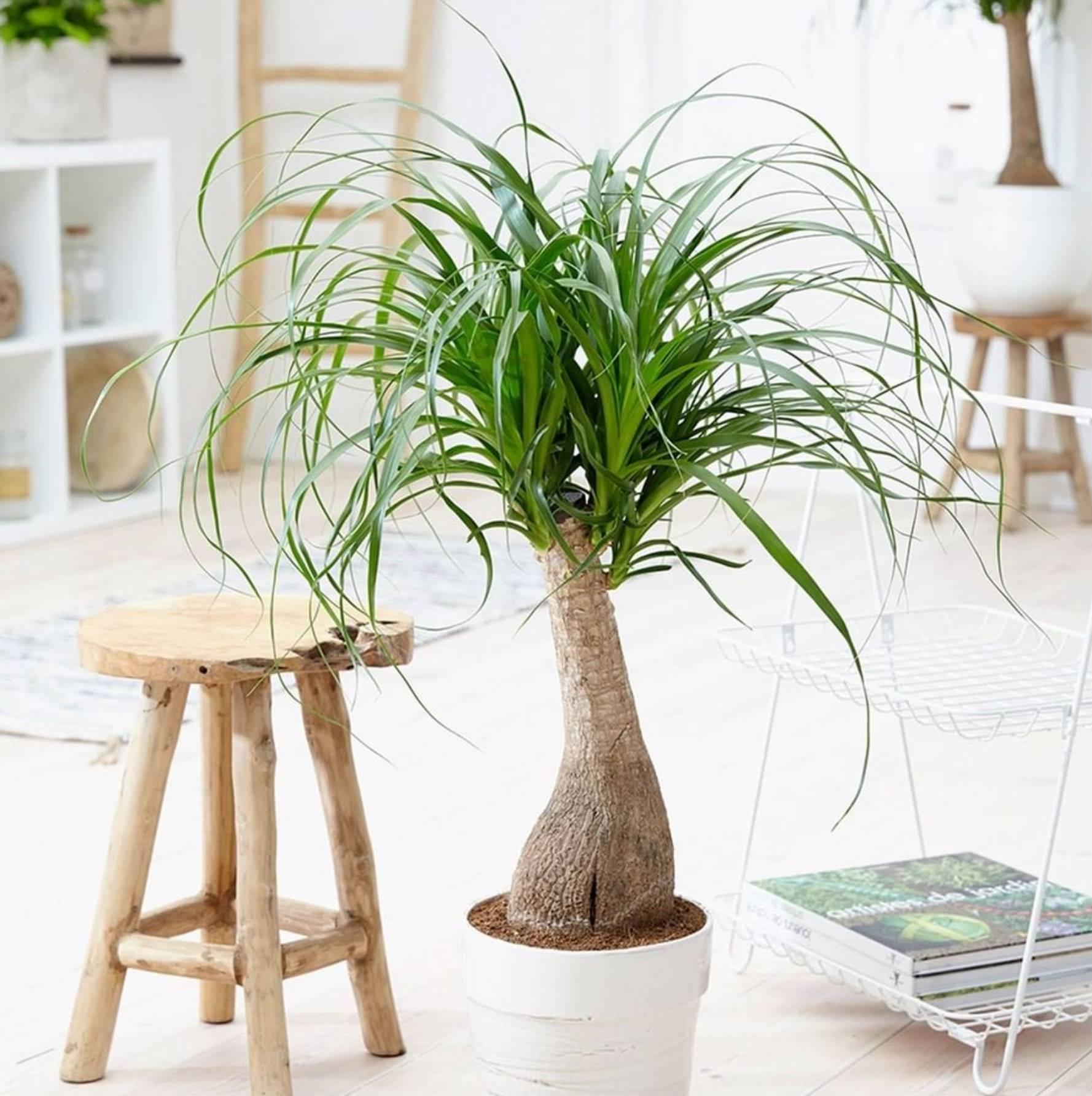 30 Plantas De Interior Resistentes Y Fáciles De Mantener