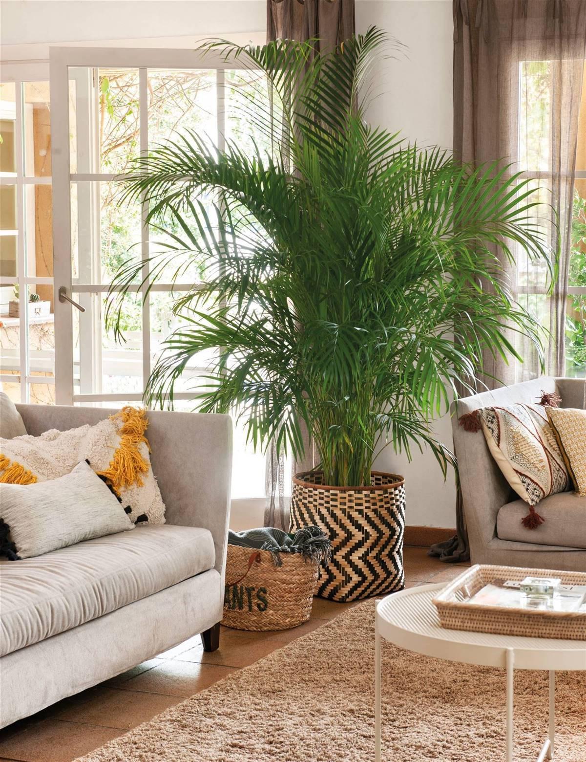 Macetas De Interior Decorativas Que Elevarán El Estilo De Tus Plantas